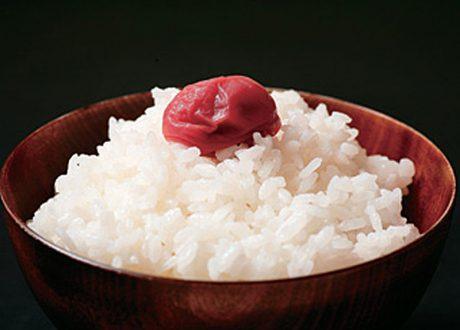 福井県坂井市産 コシヒカリ 玄米
