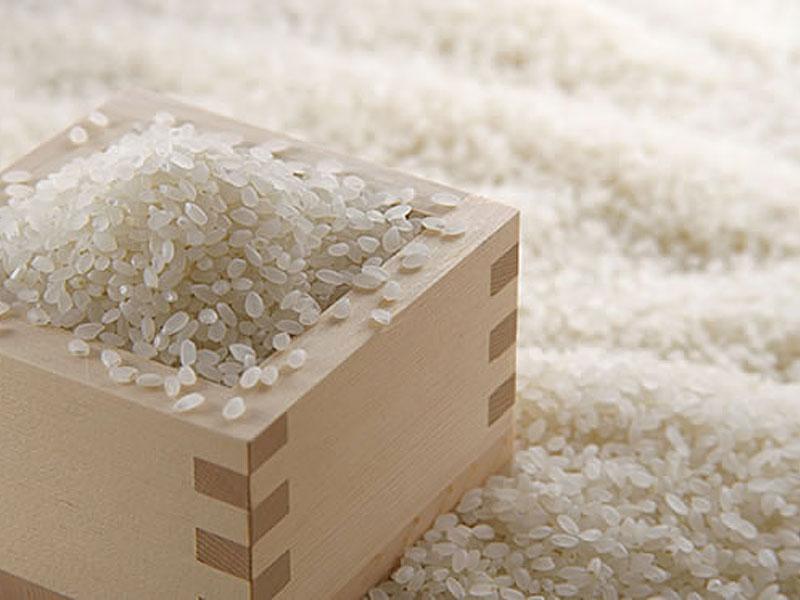 福井県坂井市産 コシヒカリ特別栽培米 玄米