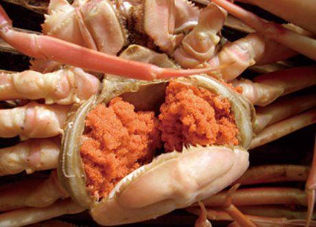 越前蟹 セイコカニ